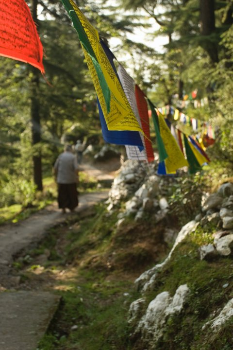 The Kora (pilgrimage) around the Dalai Lama Temple Complex
